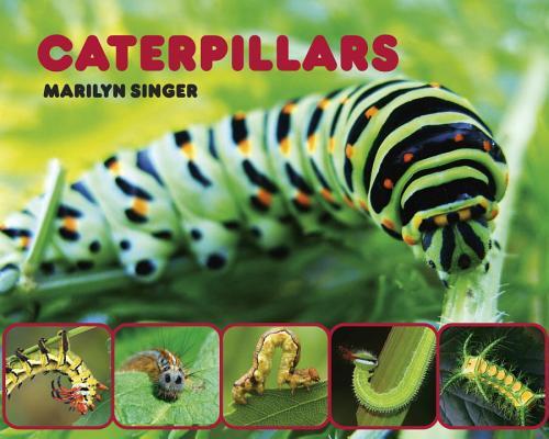 Caterpillars By Singer, Marilyn